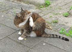 gezonde kat